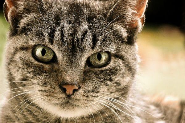Comment trouver la chatière adéquate pour votre chat ?